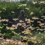 A man surrounded by locusts
