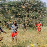 Children in a field surrounded by locusts