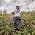 Woman in a field surrounded by locusts