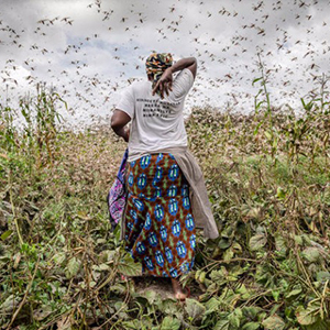 A woman in a field surrounded by flying locusts - thumbnail